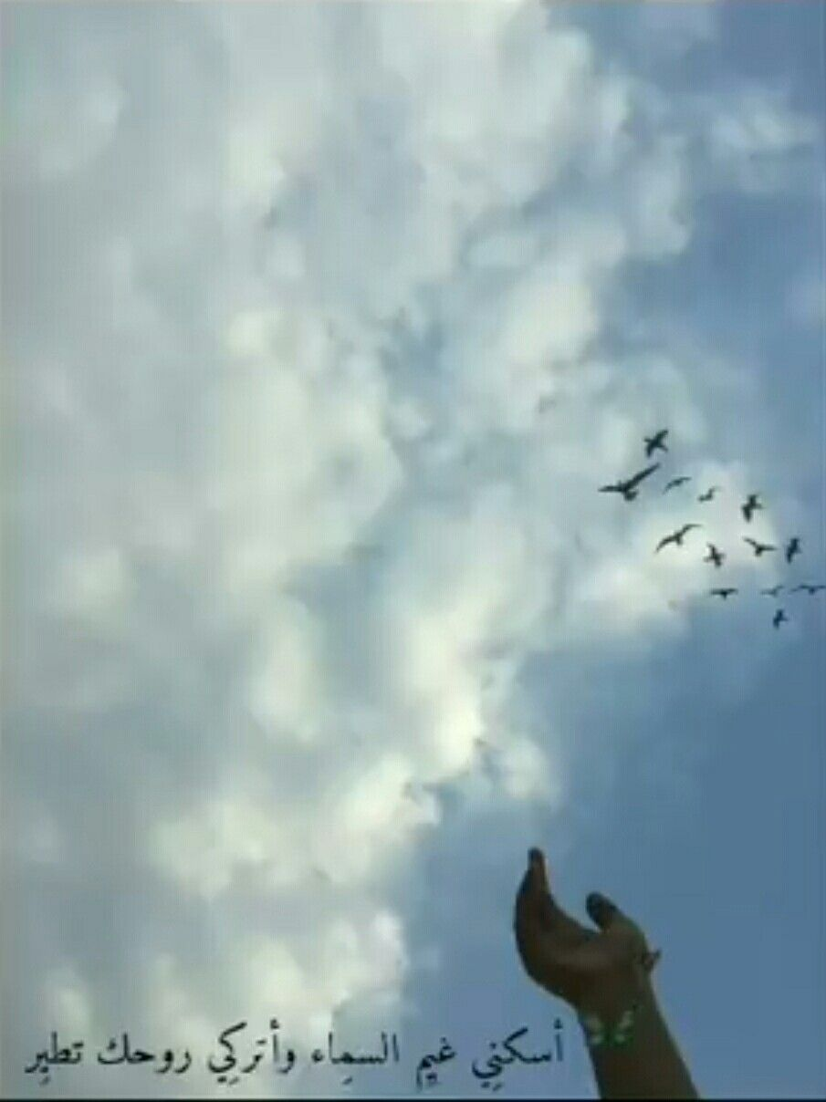 Pin By Sho Sho On غ ــــي ـــومـ Animals Bird Release Dove