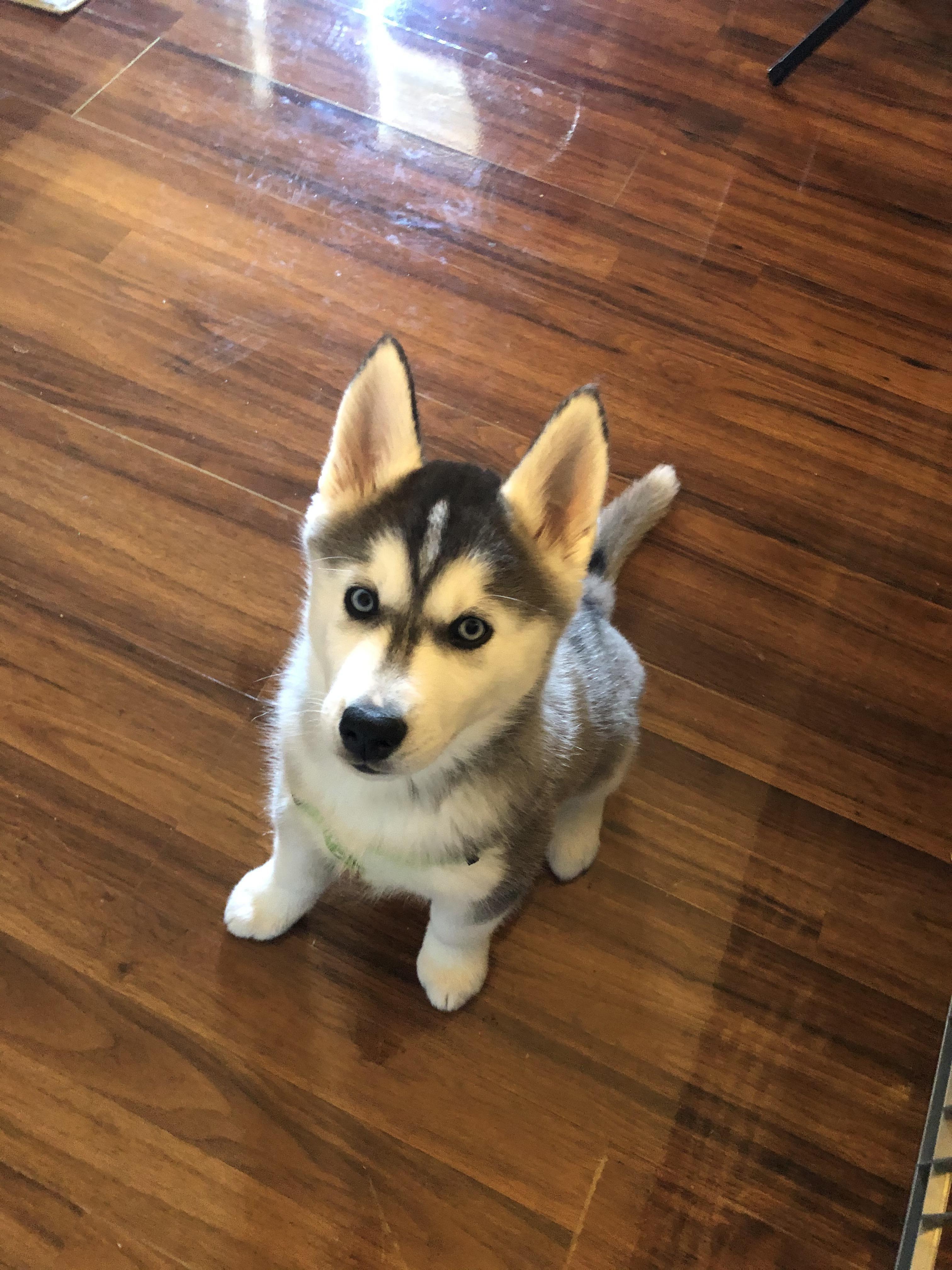 Pin On Adorable Husky Pics Only