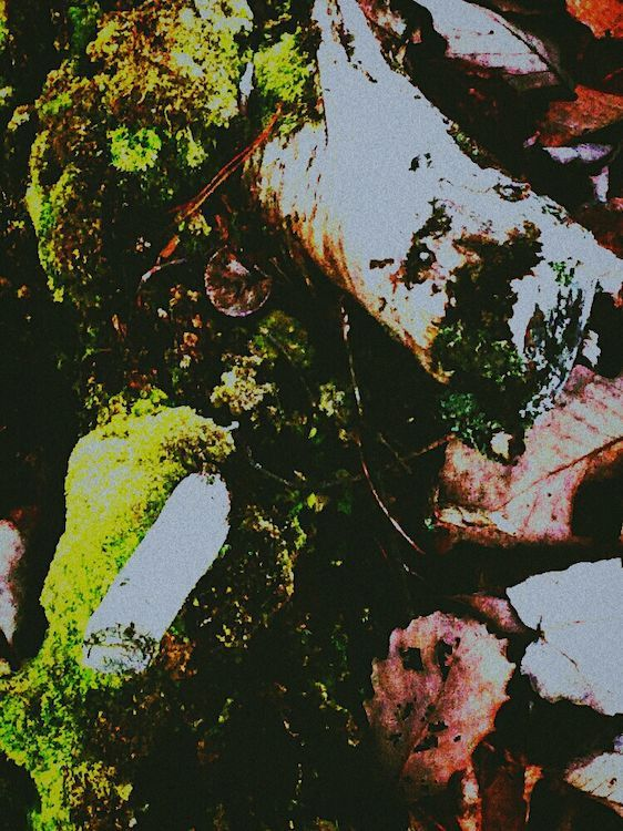 Psychic Medium Photography EyeEm Nature Lover Nature On Your Doorstep Woods Moss-covered Mossporn Taking Photos Check This Out Illusion Art Trippy Darkart Surrealism Psychedelic Trippin' Creative Light And Shadow Dream Trippy! EyeEm Best Shots Light And Shadow The Impurist Wood