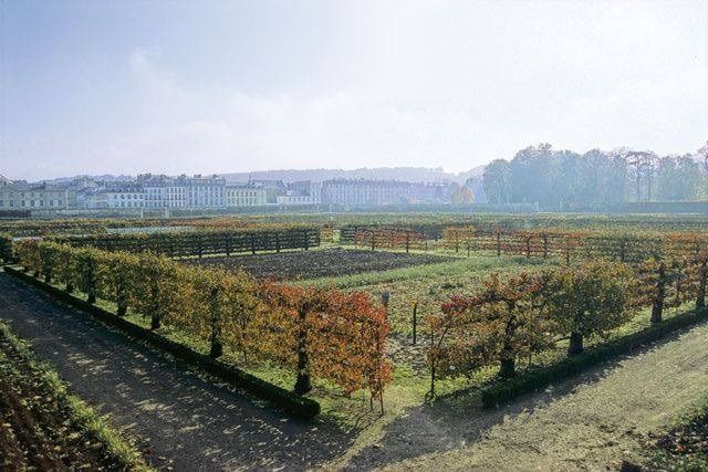 An espaliered fence | Versailles