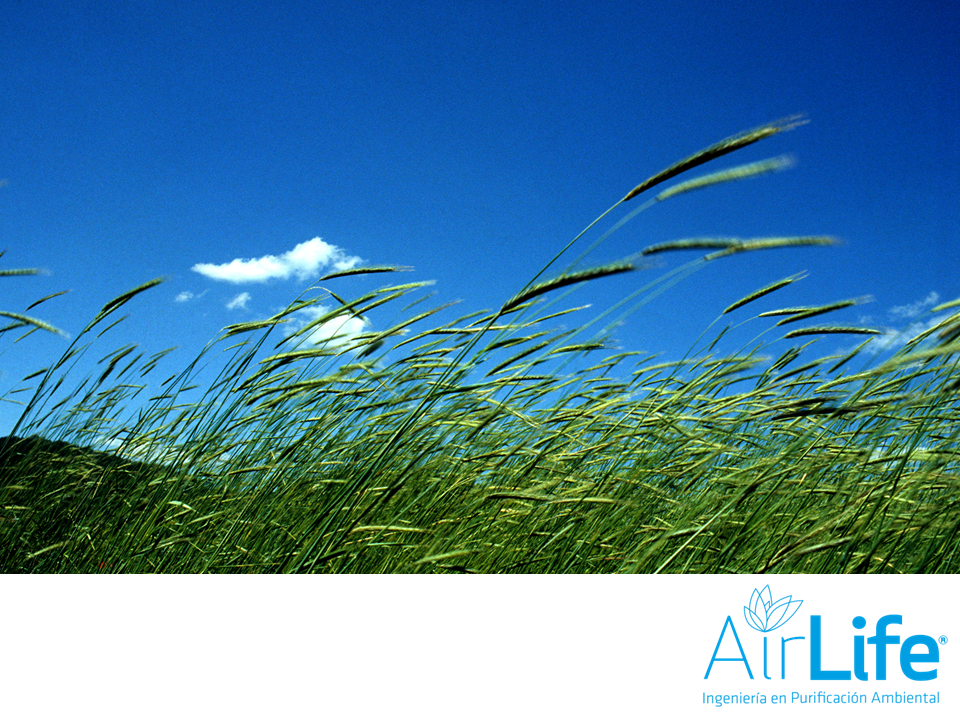 Trabajamos por un ambiente más limpio. LAS MEJORES SOLUCIONES EN PURIFICACIÓN DEL AIRE. En el aire que respiramos, se encuentran contaminantes gaseosos que con el paso del tiempo, afectan las vías respiratorias, provocando enfermedades. En AirLife, implementamos procedimientos para mejorar la calidad del ambiente. Para mayores informes, te invitamos a visitar nuestro sitio en internet www.airlifeservice.com. #airlife
