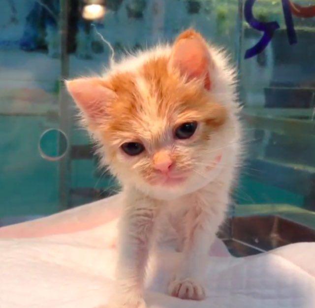 rescue kitten kittysolo godfrey gao