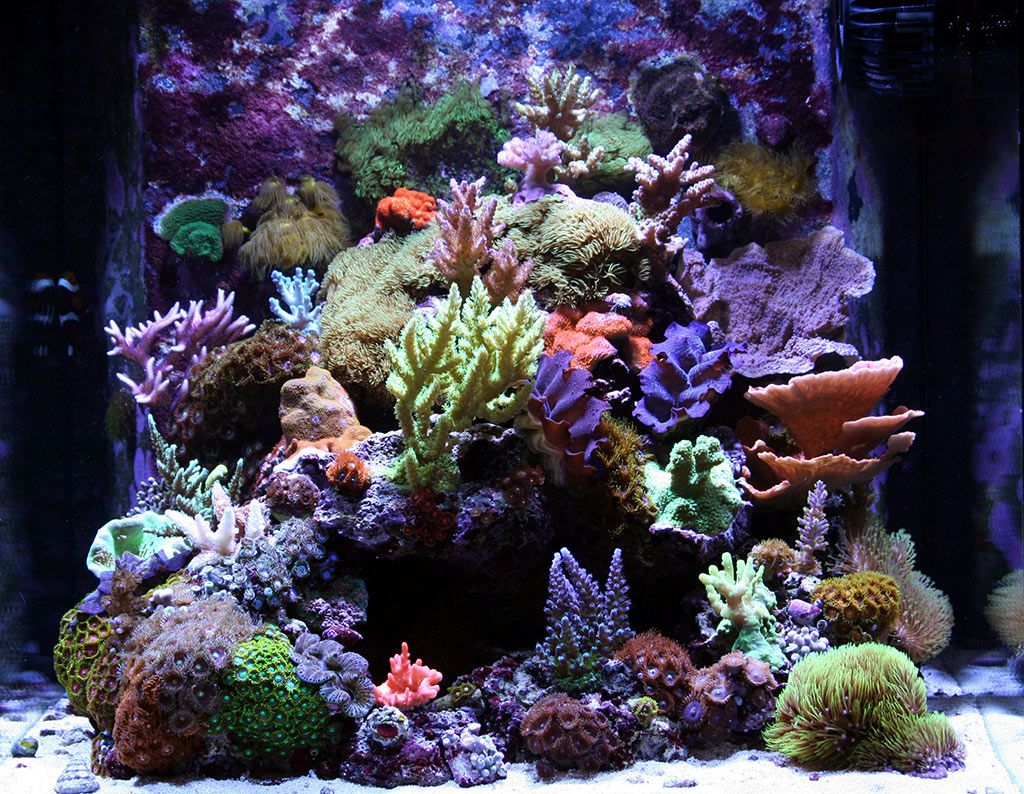 Fish aquarium market in delhi - 17 Best Images About Aquarium On Pinterest African Cichlids Malawi Cichlids And Cichlids