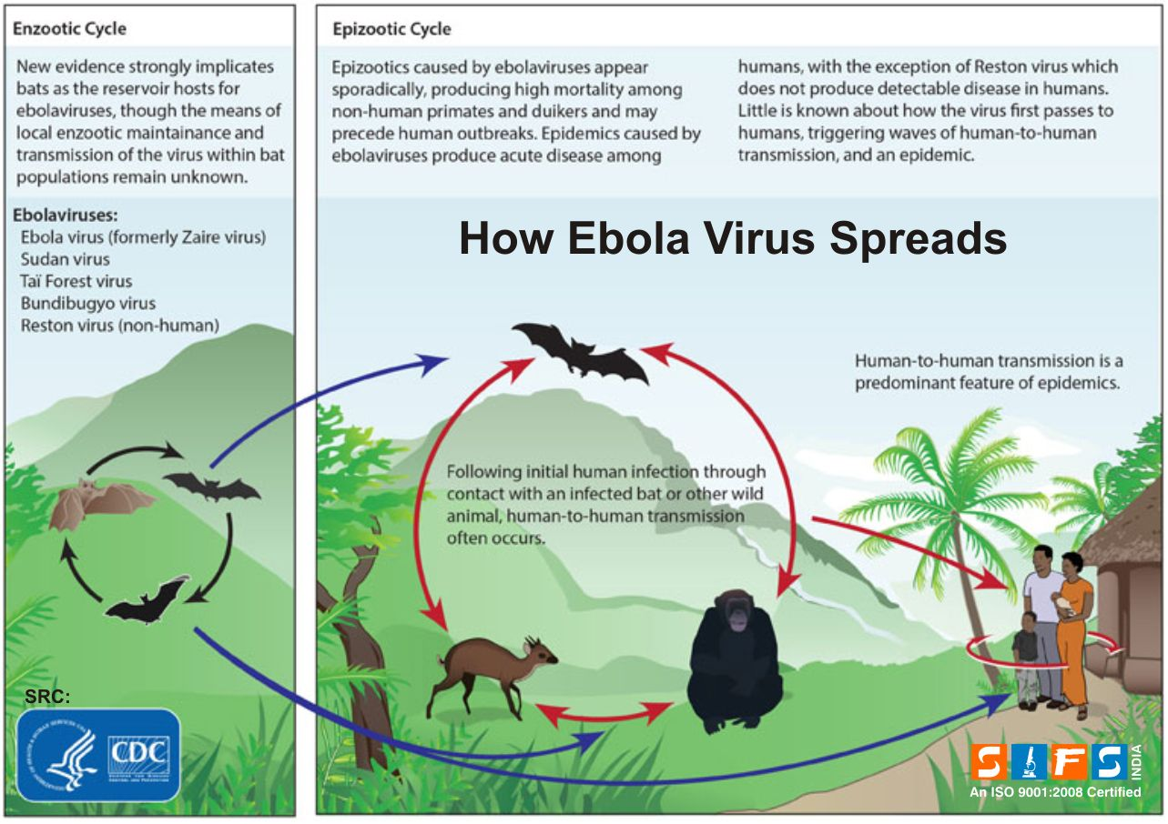 How ebola virus spreads healthy facts pinterest healthy facts healthy facts pooptronica