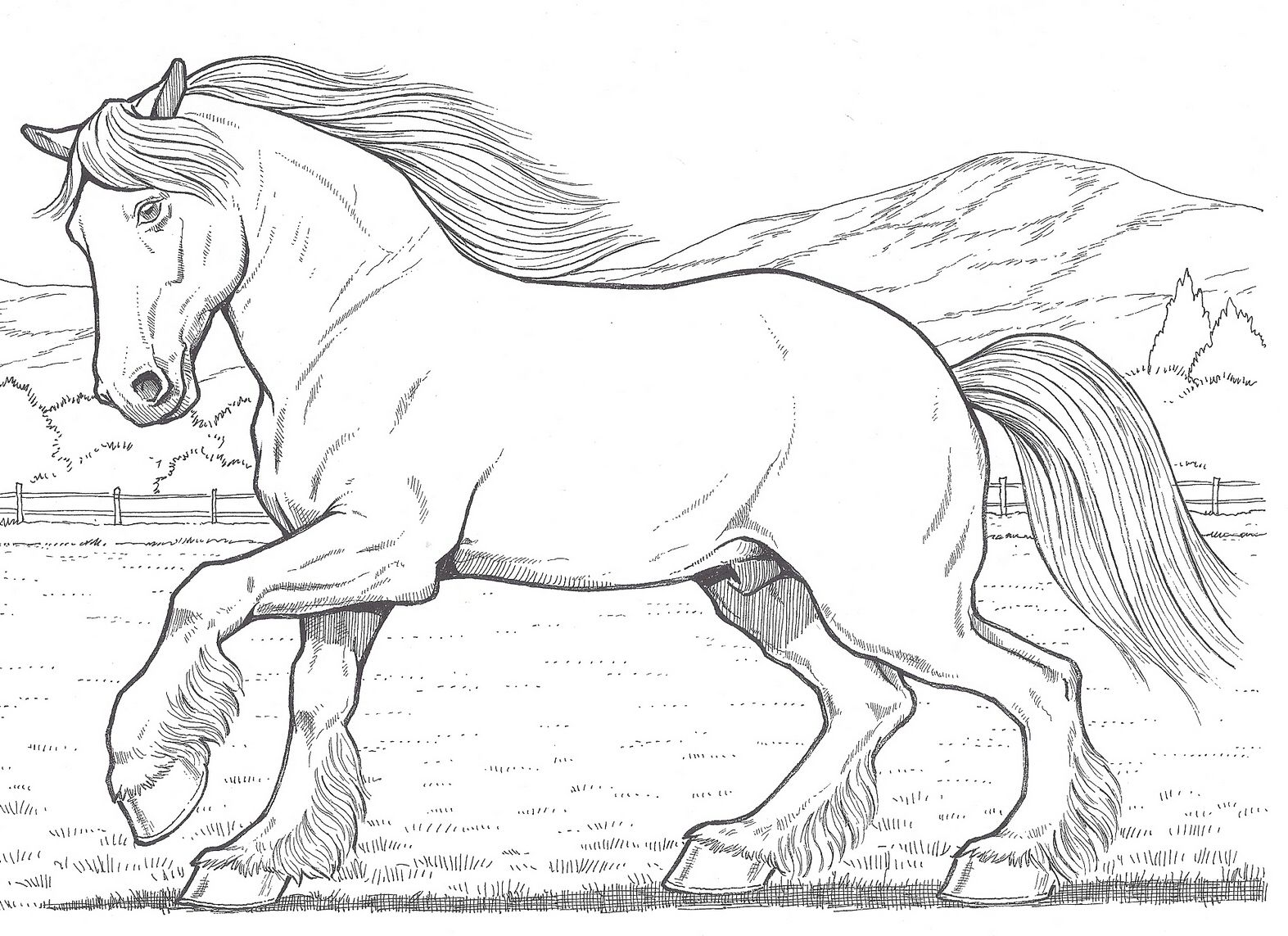 A Clydesdale Horse Coloring Books Horse Coloring Horse Coloring Pages