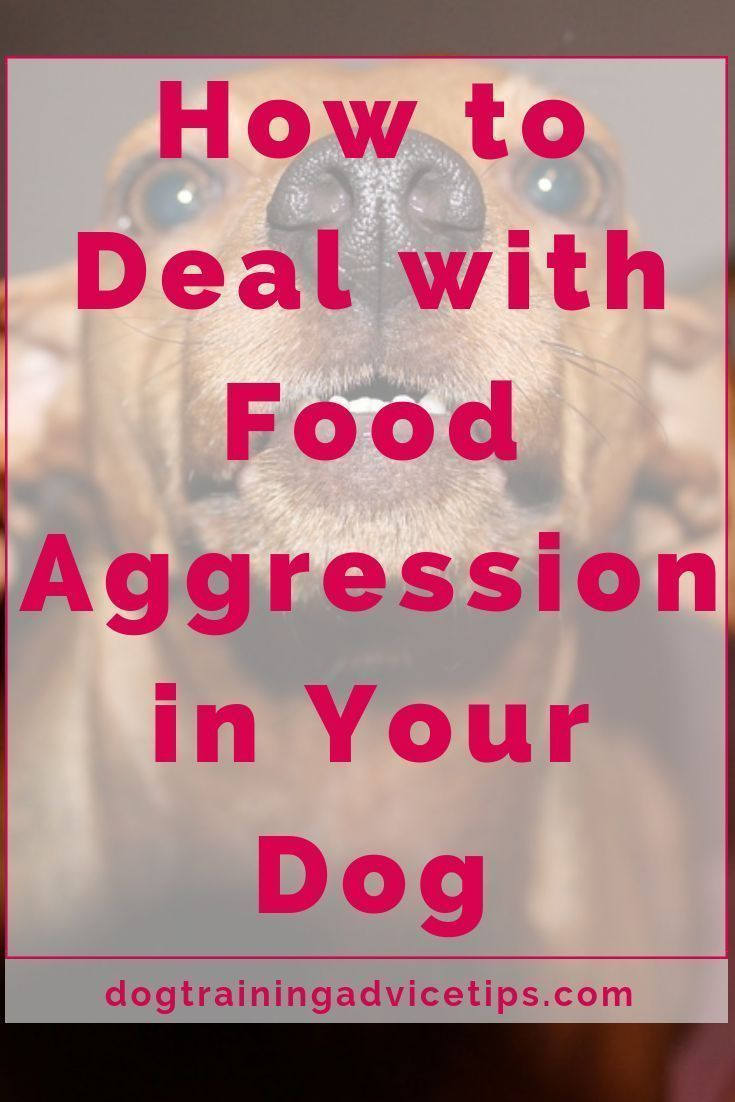 Dealing with food aggression in dogs food aggression in