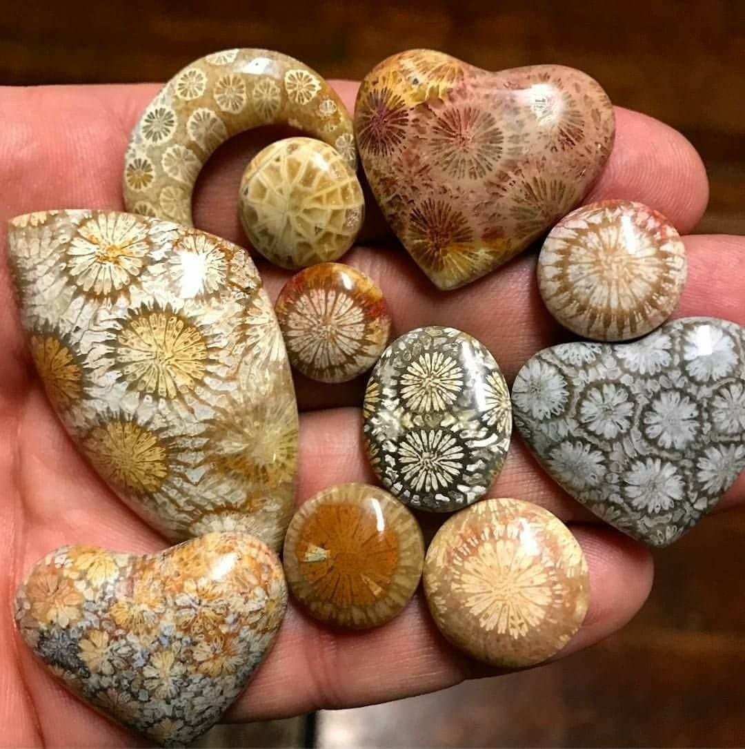 Beautiful Group Fossil Coral Stones
