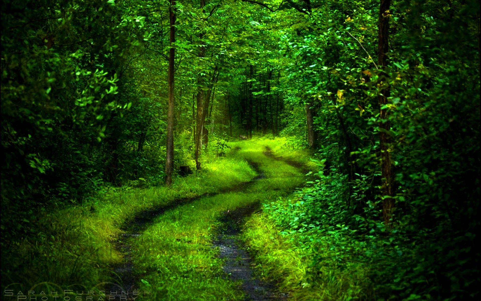 nature Landscape Dark Path Trees Sunlight Fall Shrubs Red