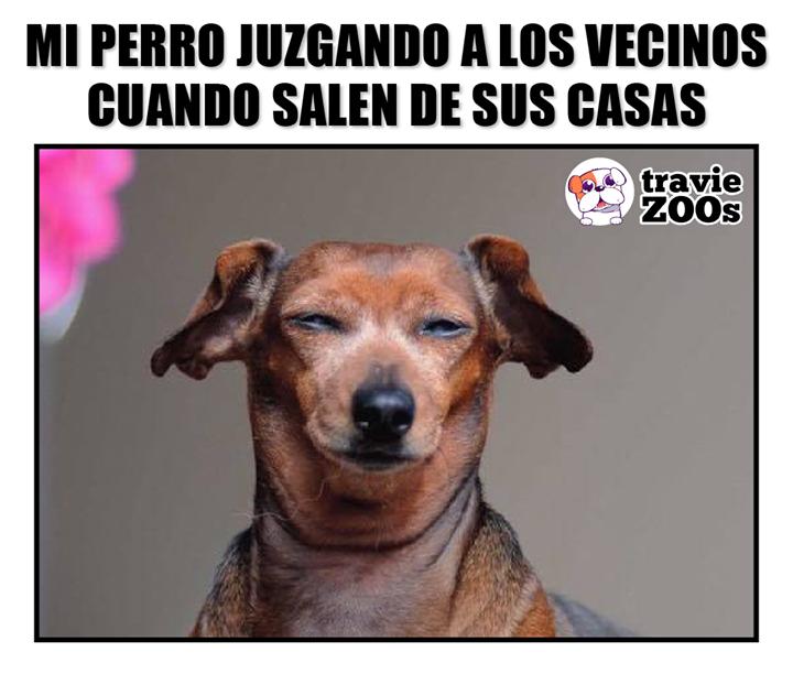 Mi Perro No Muerde Pero Juzga Perros Animales Y Mascotas Mascotas