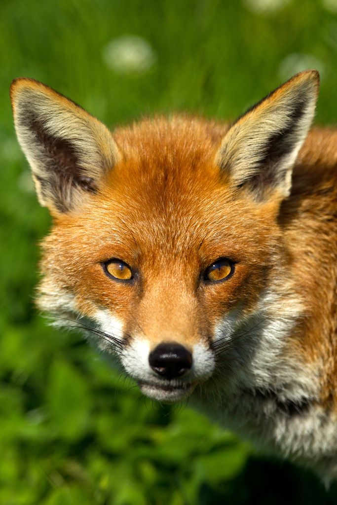 Fox; what does it say????...lol