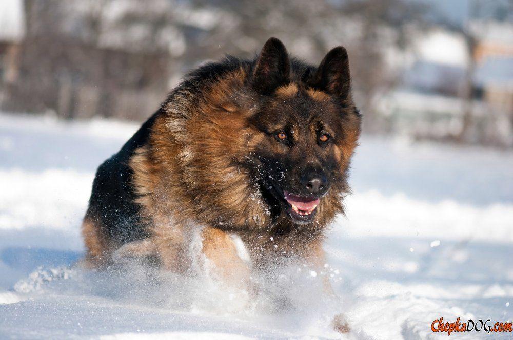 Fotos von deutschen Hunde