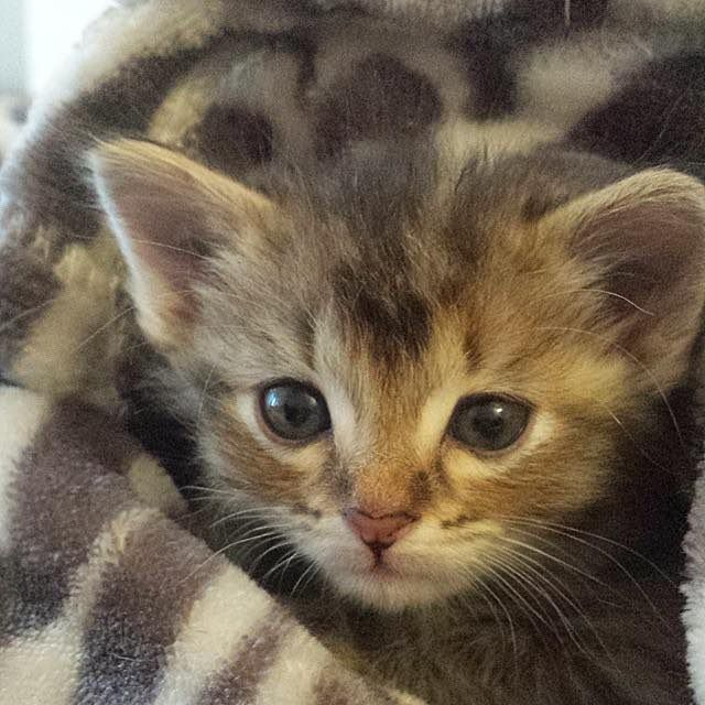 Meet Adele A Tiny 4 Week Old Kitten Found As A Stray Wandering