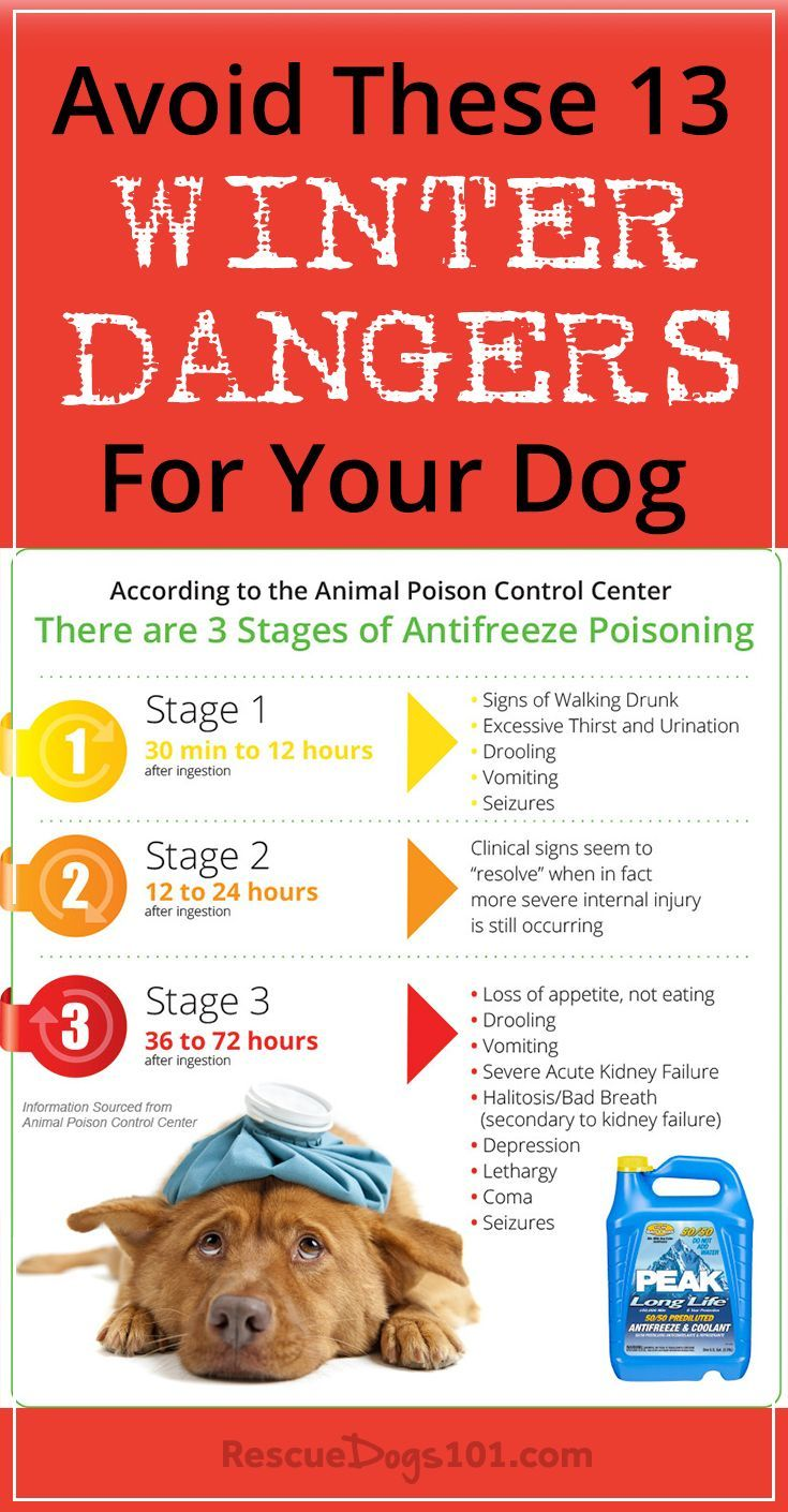 Avoid These 13 Scary Winter Dangers for Your Dog Dog
