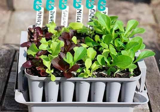Følg havekalenderen og få de lækreste hjemmedyrkede grøntsager året igennem. Forspir inde og dyrk 2-3 forskellige grøntsager på samme plads i sæsonen.