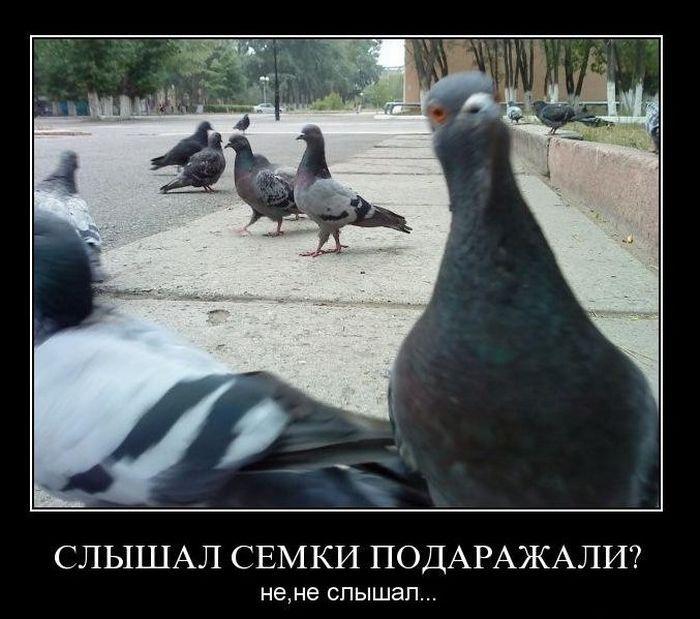 Картинки про голубей приколы