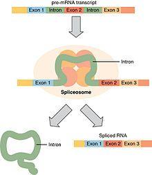 Exon Biology