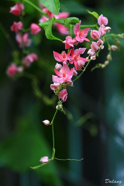 Tiny pink flowers flower flowers and gardens tiny pink flowers mightylinksfo