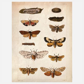 The series of incredibly detailed illustrations of moths and caterpillars depicted in the Science Moth Print by Curious Prints are actually a page culled from a salvaged vintage science textbook.