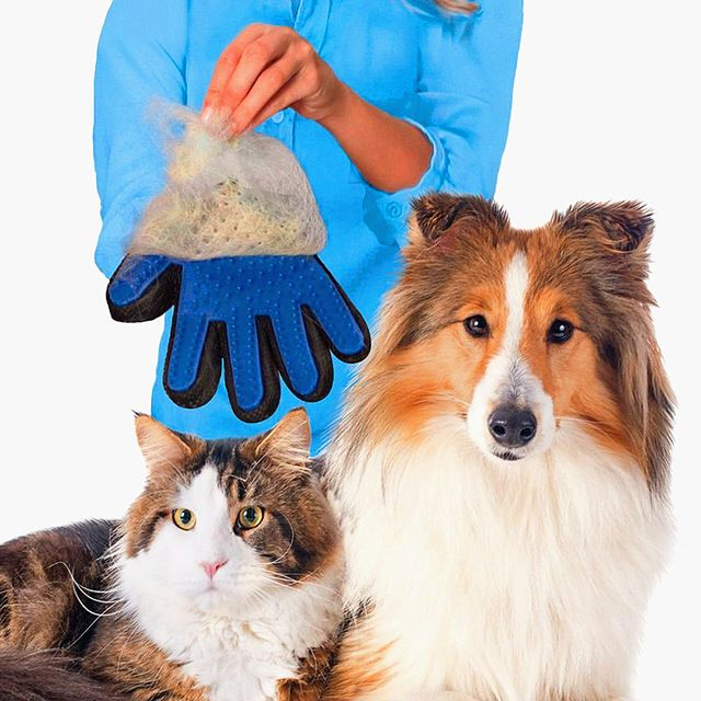 Dogs grooming kits dog grooming diy dog grooming business dog dogs grooming kits dog grooming diy dog grooming business dog grooming ideas dogs grooming near me dogs grooming tips dog grooming supplies solutioingenieria Images