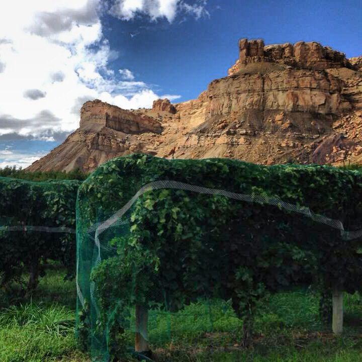Bookcliffs & Palisade Vineyards, Colorado