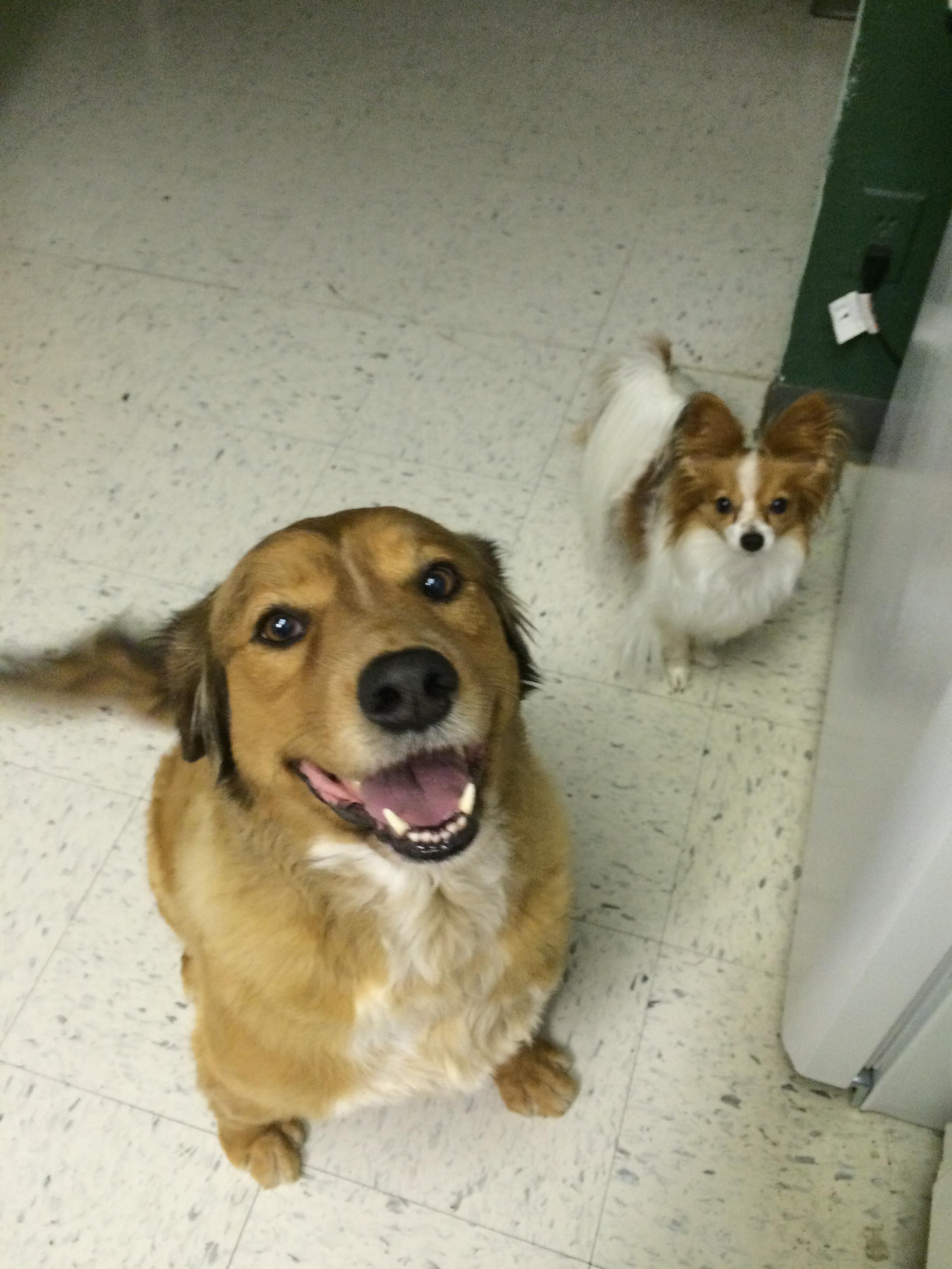 We provide door to door services for pet transportation