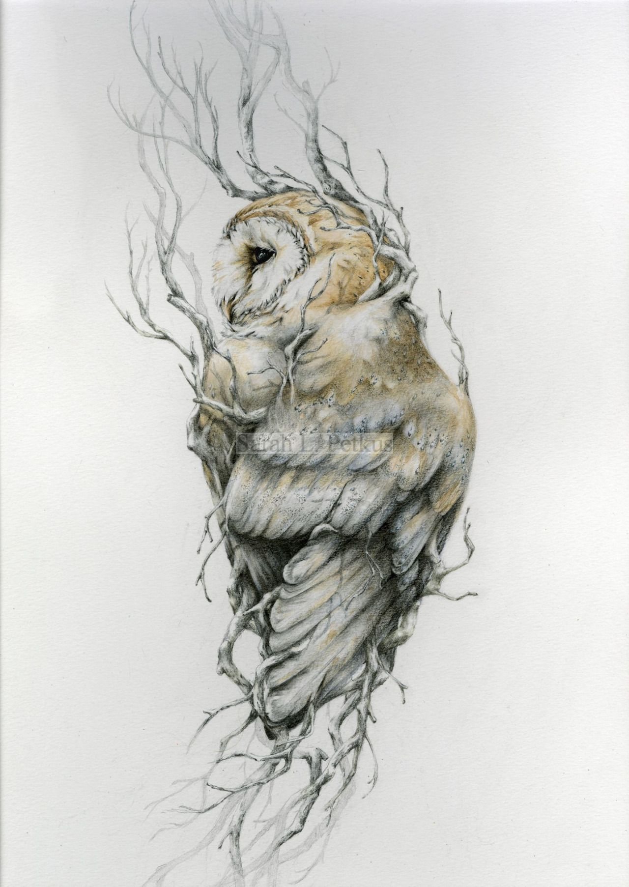 Forest lore owls drawing owl art tattoos