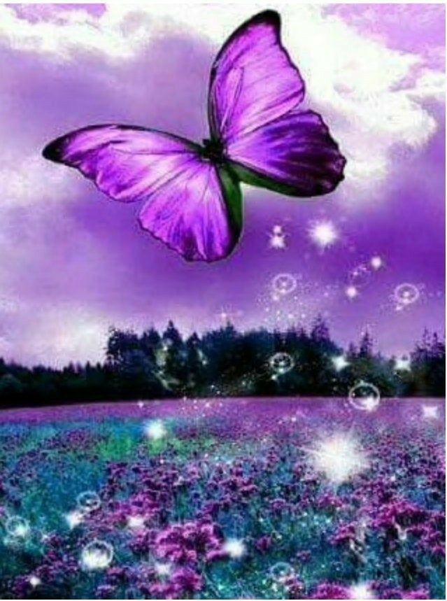 Pin by Billy Marks KD9JDD on avond plaatjes.   Butterfly ...