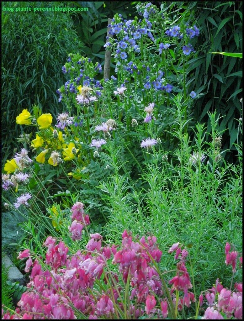 Blog perennials - perennial plants: A good year.
