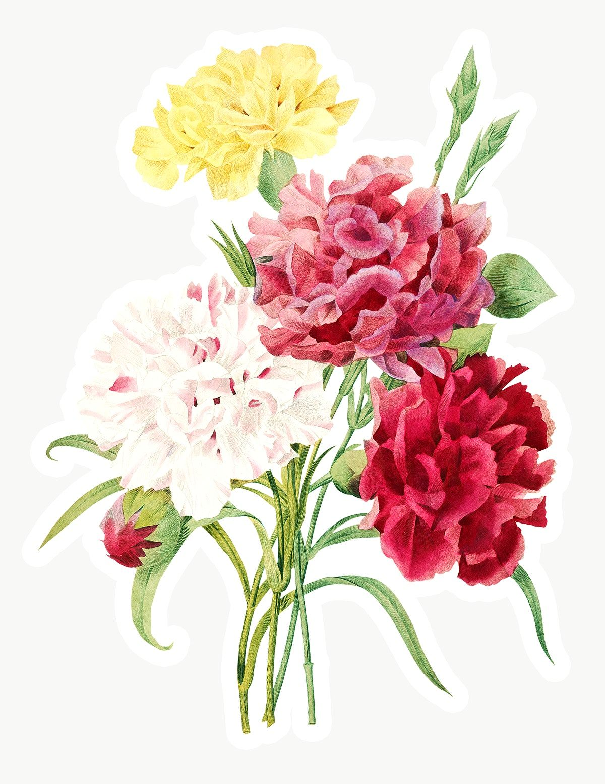 Pin By Rawpixel On Textiles In 2020 Watercolor Flowers Carnation Flower Flowers