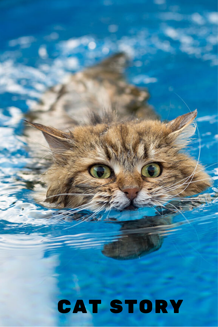 This Cat Swims So Gracefully, She May Be Part Otter! in