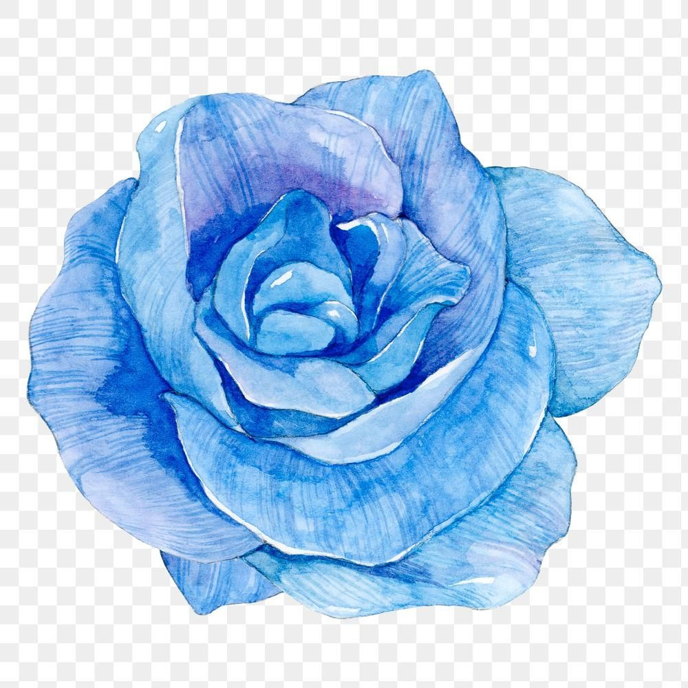 Png Blue Watercolor Rose Flower Illustration Free Image By Rawpixel Com Boom Flower Illustration Blue Flower Wallpaper Watercolor Rose