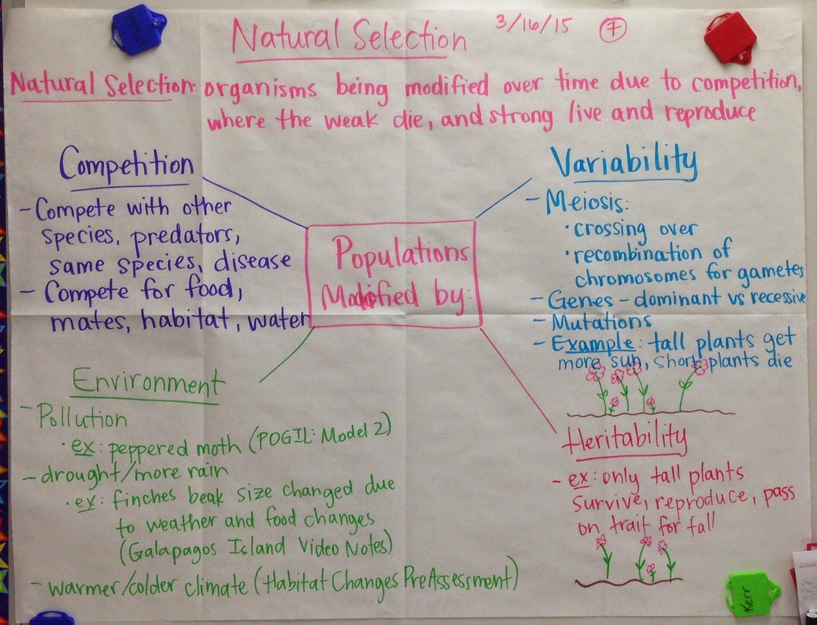 evolution and natural selection interactive notebook activities mrs paul biology natural selection glad anchor charts notes