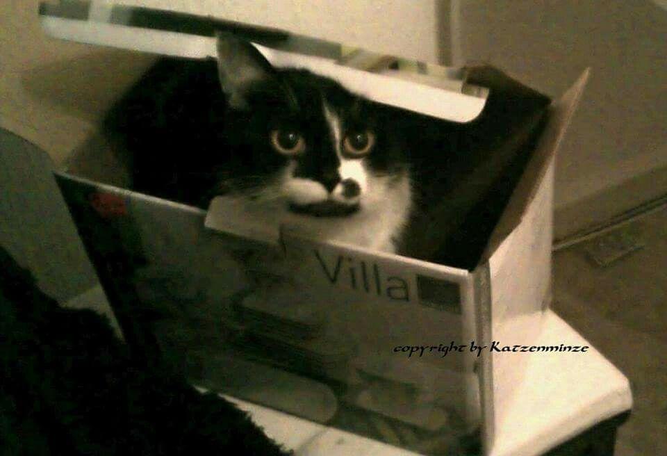 Katzen und Kartons...