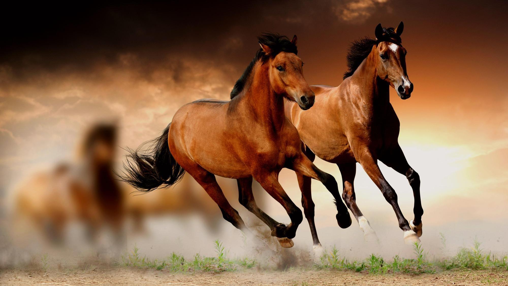 Horse Wallpapers HD Download Horse wallpaper, Horses