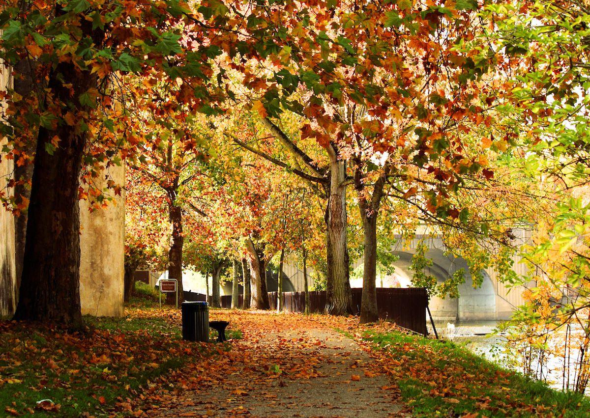 chemin des remparts paysage d 39 automne metz lorraine france places pinterest. Black Bedroom Furniture Sets. Home Design Ideas