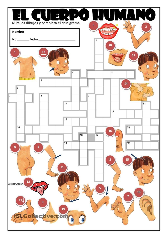 EL CUERPO HUMANO | Gratuito ELE worksheets | Proyecto cuerpo humano ...