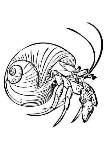 Common Hermit Crab Or Soldier Crab Coloring Page From Crabs