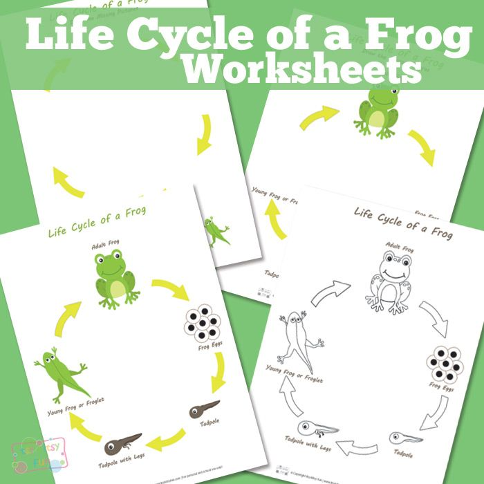 Life Cycle Of A Frog Printable Science Worksheets Science Worksheets Life Cycles Animal Worksheets