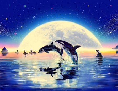 Killer whales in moonlight whales wallpaper id 1824973 killer whales in moonlight whales wallpaper id 1824973 desktop nexus animals thecheapjerseys Images