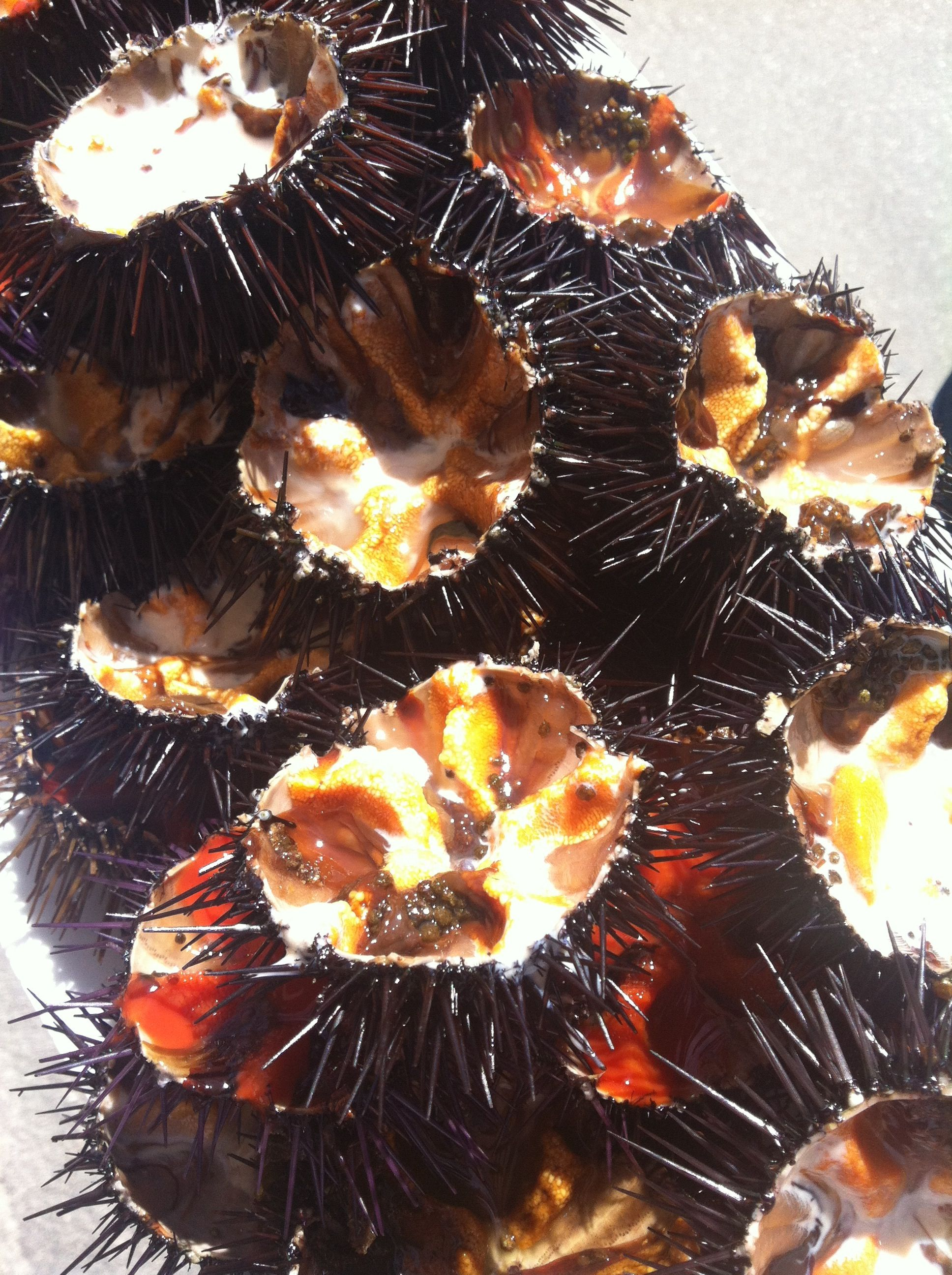 I fantastici ricci di mare, Ristorante Corallo Santa Maria al Bagno ...