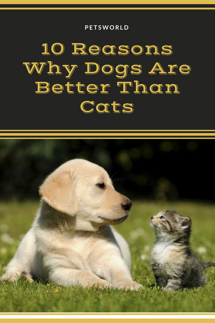 Dogs Are Better Than Cats Here Are 10 Reasons to Prove