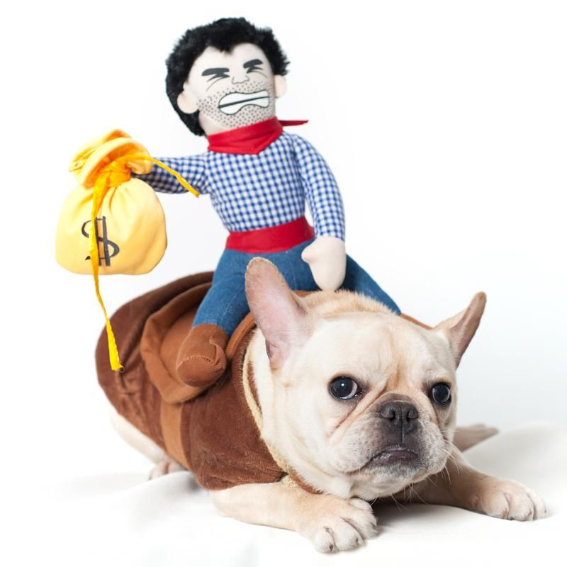 French Bulldog In A Cowboy Costume Halloween Costume On Sale Now