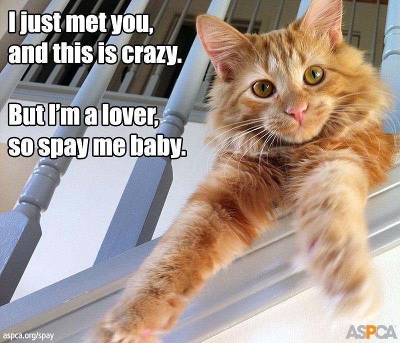 Please spayneuter your pets veterinary humor spay aspca
