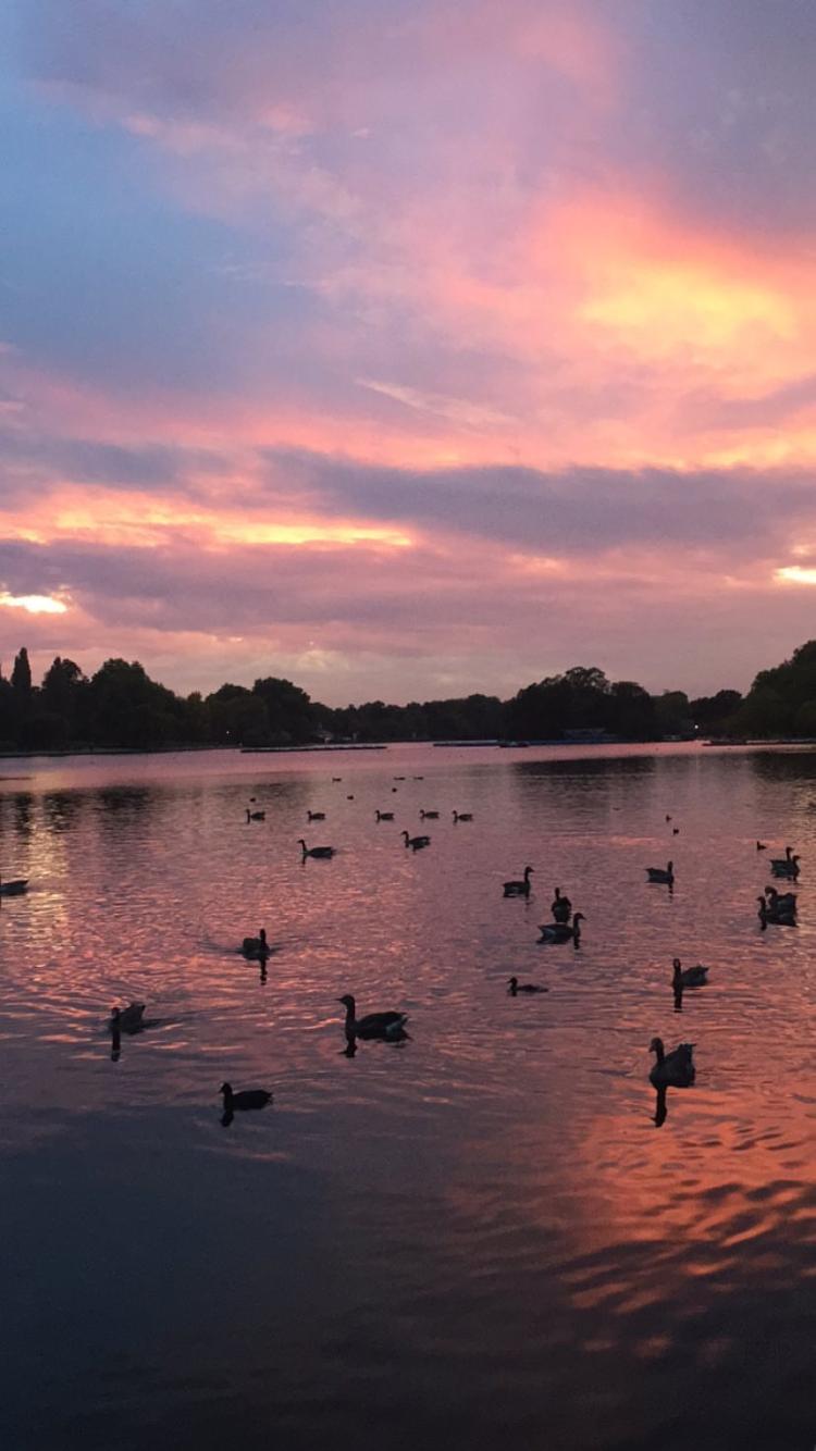 Pink London Hyde Park Sunset Wallpaper Iphone
