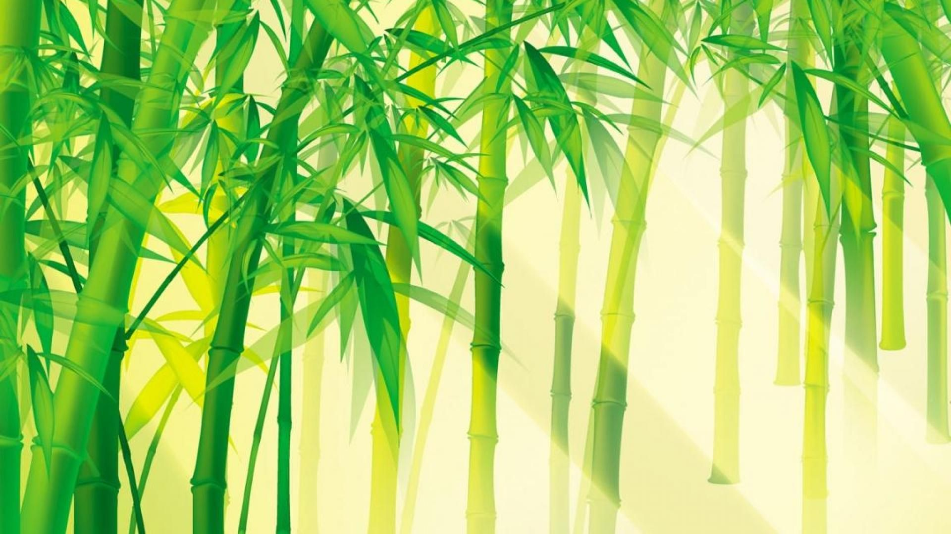 bamboo forest wallpapers wide with high resolution wallpaper