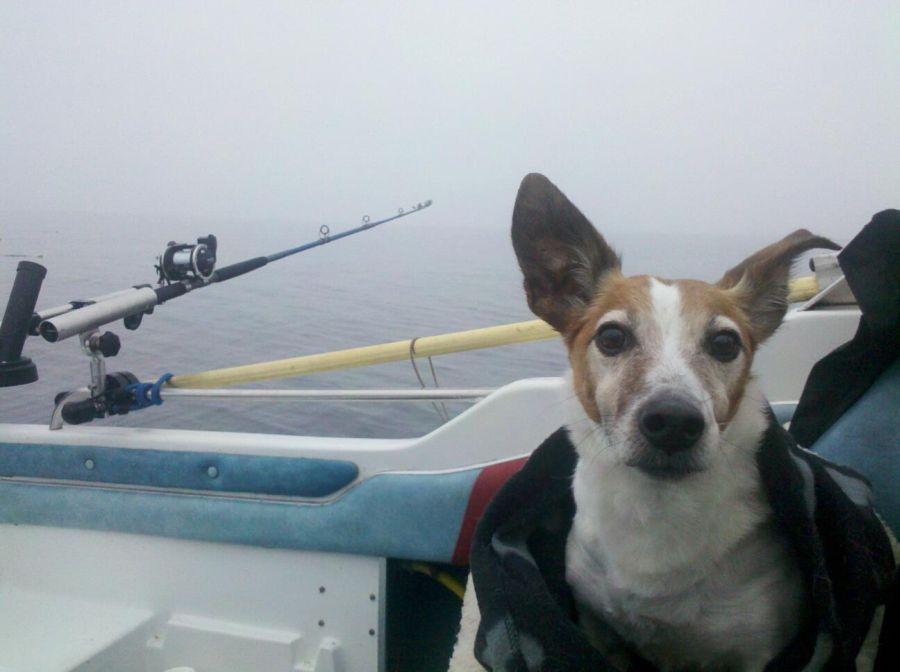fishing buddy at the Baltic Sea