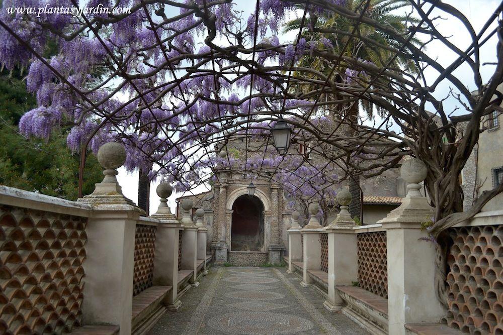 Soportes para enredaderas glicina en la terraza de la fuente del rgano en villa d 39 este tivoli - Fuente terraza ...