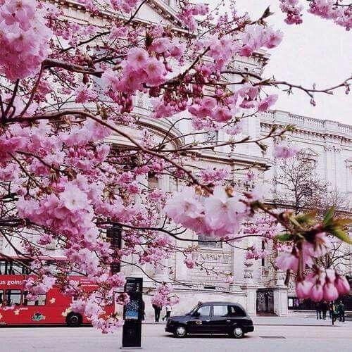 Pin Ot Polzovatelya Katy Hinkley Na Doske Tree People Trees London Krasivye Mesta Cvety