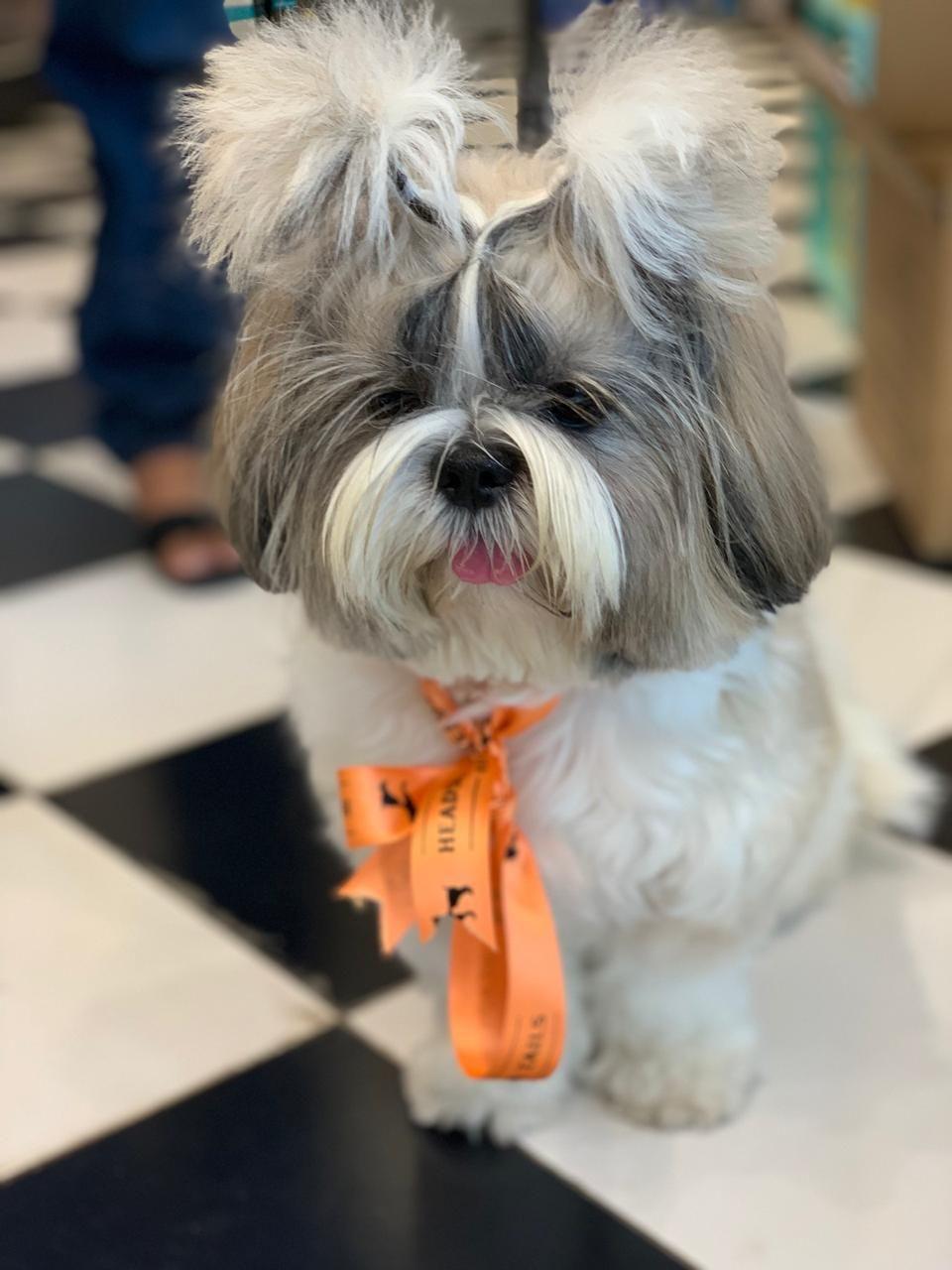 Avoid The Trouble Of A Messy Bath At Home And Bring Your Pet By For A Groom Gentle Shampoos And Conditioners Professional Gr Gentle Shampoo Pet Spa Your Pet