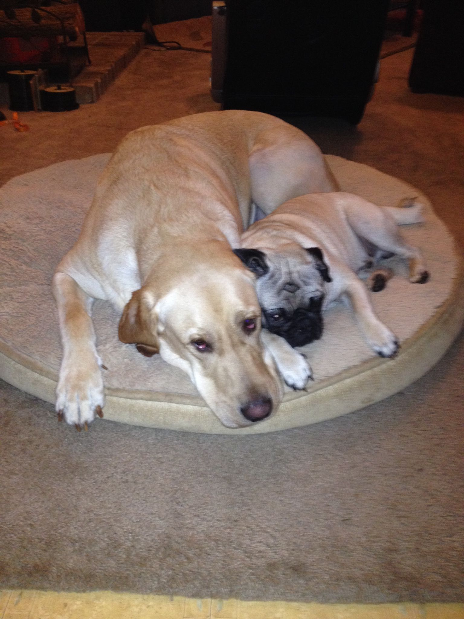They love each other best buds for ever <3